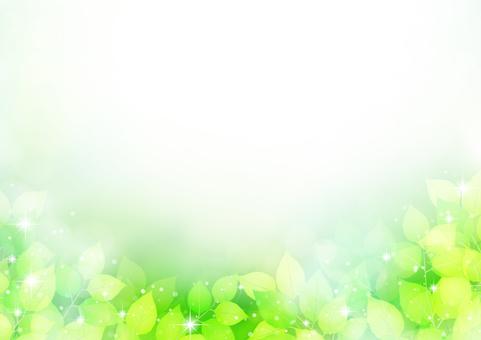 Leaf 315