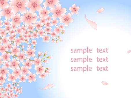80220.桜風景,背景白3