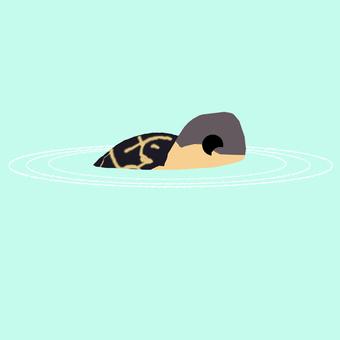 Bath of a tortoise
