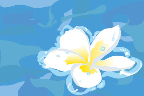 Hawaiian plumeria flowers floating in water