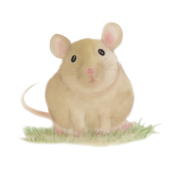 Mouse Real 02