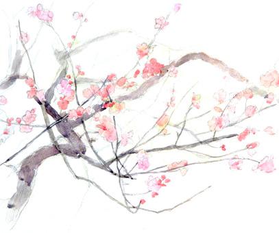【Handwritten】 plum
