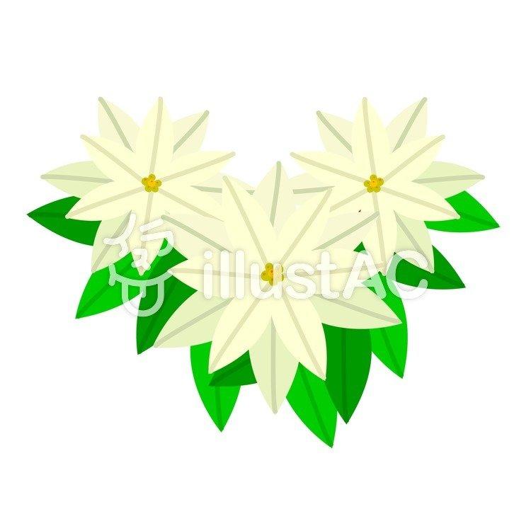 Freie Cliparts: Poinsettia Weiß Weihnachten Eine dekoration ...