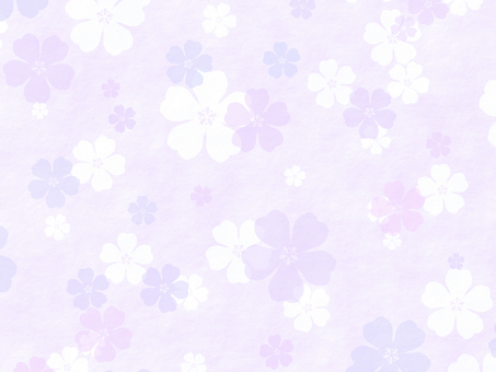 Cherry blossom wallpaper purple