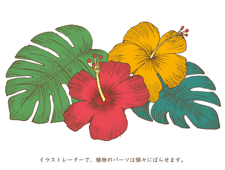 Hibiscus hand drawing