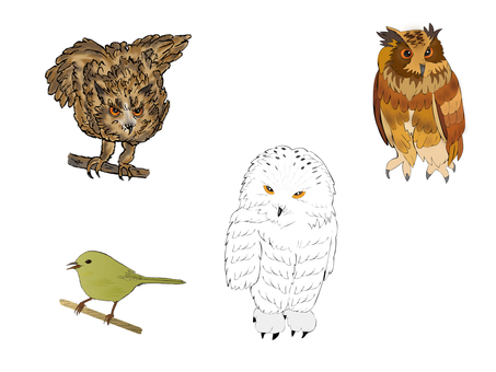 Various sets of birds 1
