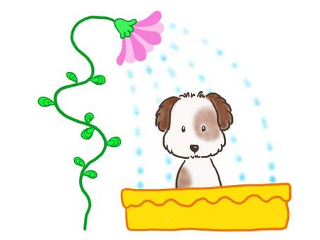 Shower dog 1