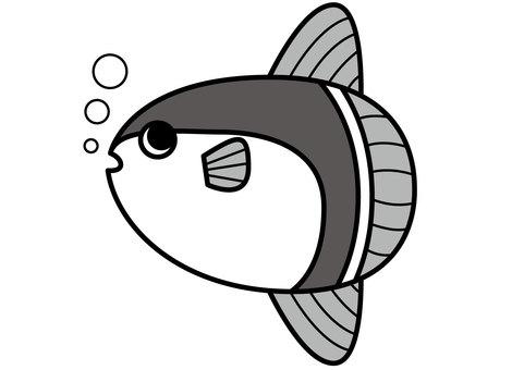 Sunfish 2c