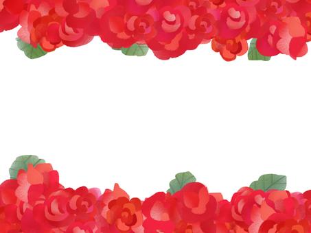 베고니아 빨강