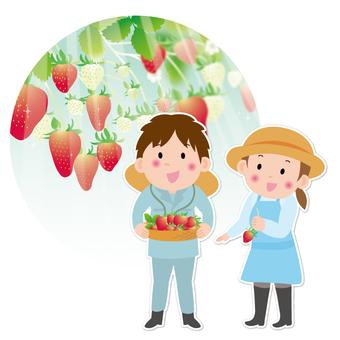 Strawberry farmer