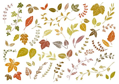 Leaf autumn color