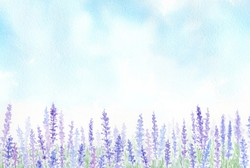 Lavender field drawing with transparent watercolor