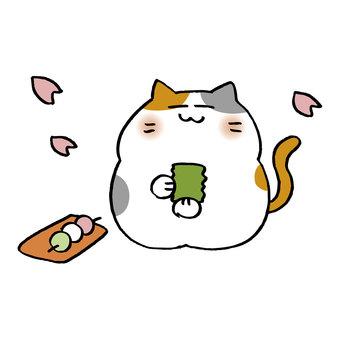 Hanami cat
