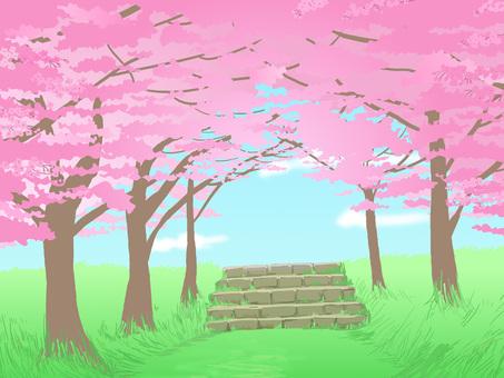 Sakura Trail