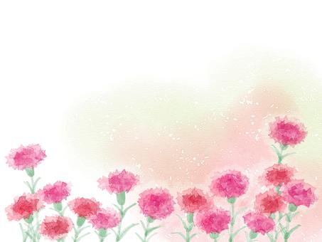 Carnation 4