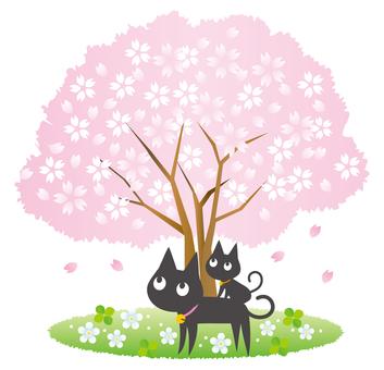 貓和父母櫻花觀賞
