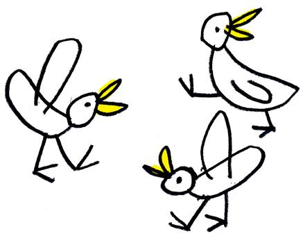 Dove pigeons