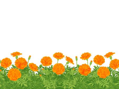 Flower garden frame of marigold