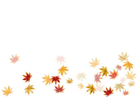 Autumn leaves 224