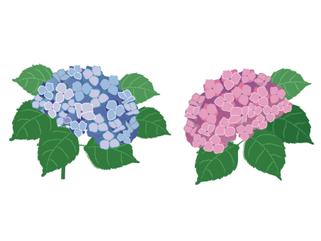 flower_ 수국