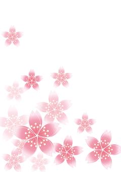 Sakura Sakura 16