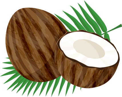 Coconut _ leaves