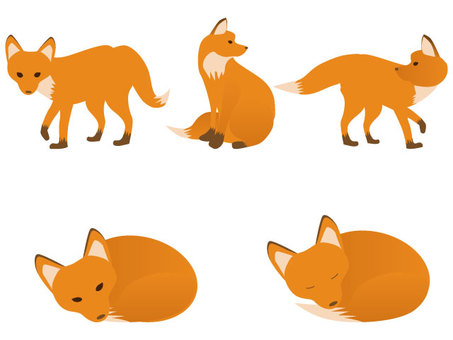 Fox various poses
