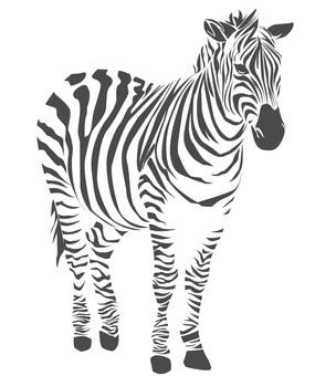 Zebras whole body