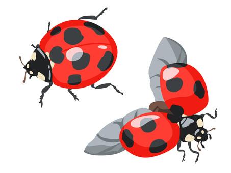 Animal _ Bug _ ladybird _ no line