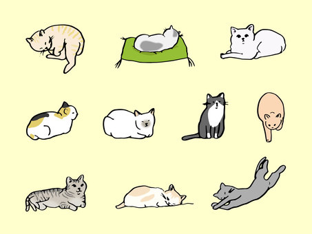 Various patterned cat