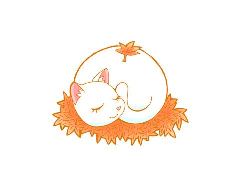 睡覺在槭樹的貓