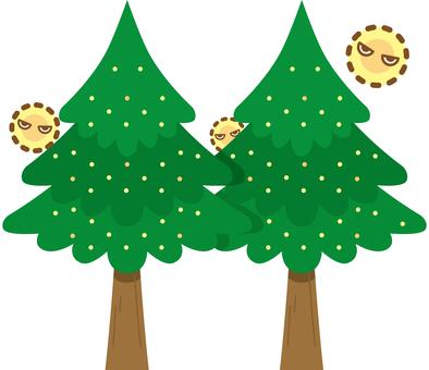 Cedar tree cedar pollen