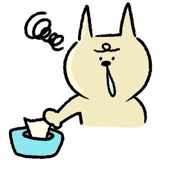 A runny nose cat