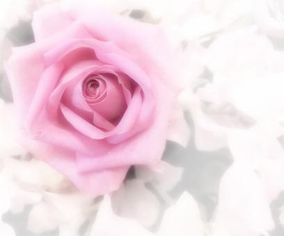 Flower message card 4-A