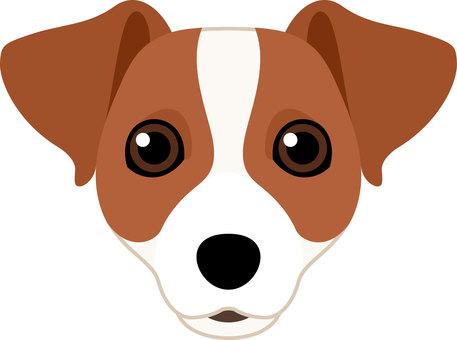 Dog breed species Jack Russell Terrier