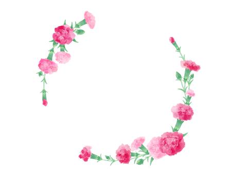 Carnation 20