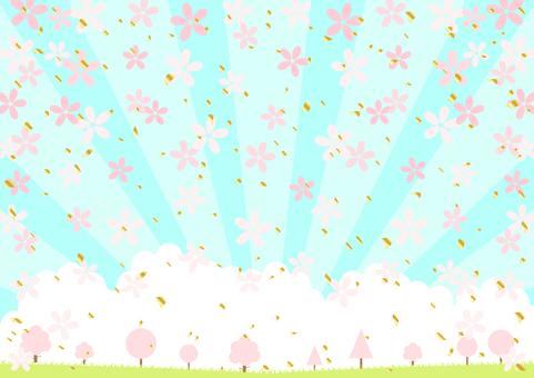 Cherry blossom, cherry tree, cherry blossom viewing