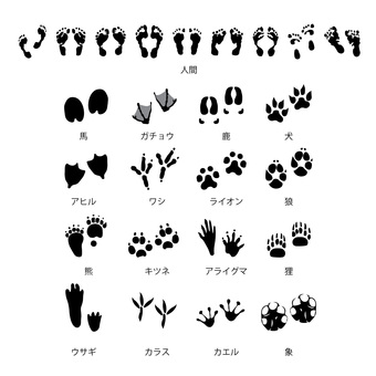 Footprint set