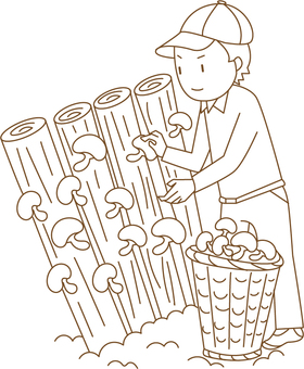 Shiitake cultivation