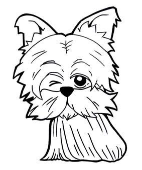 Yorkshire terrier, yorkshire terrier