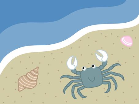 Crab and shellfish of sandy beach