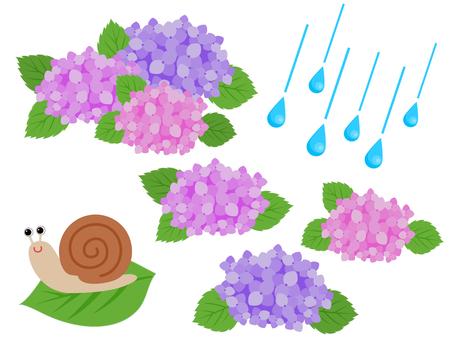 Rainy season hydrangea individual snail