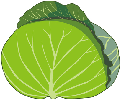 Cabbage - 01