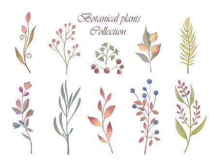植物植物收藏