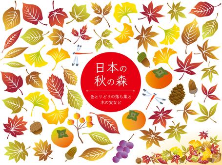 色とりどりの落ち葉・木の実など