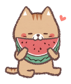 Watermelon cat