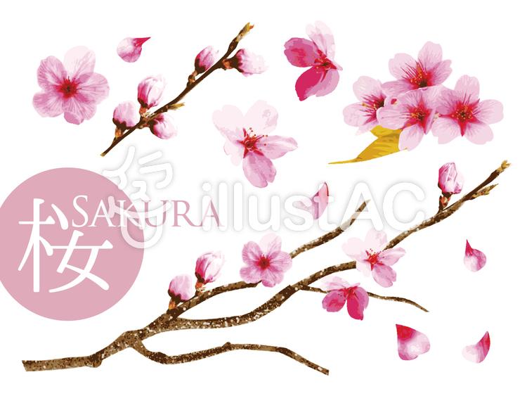 リアルな桜セットイラスト No 1034494無料イラストならイラストac