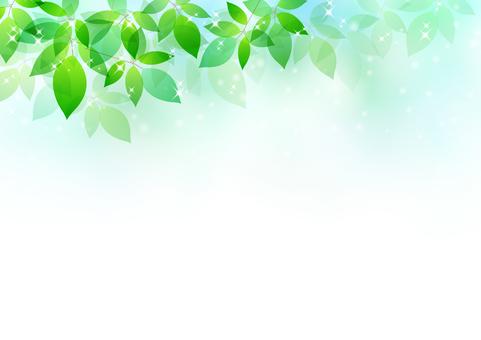 Fresh green material 59