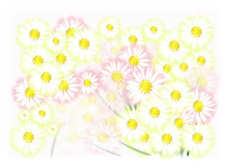 Flower background white