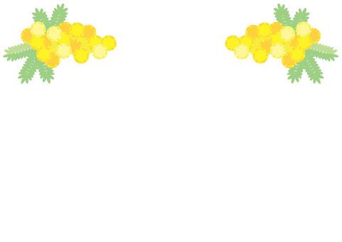 Fluffy Mimosa